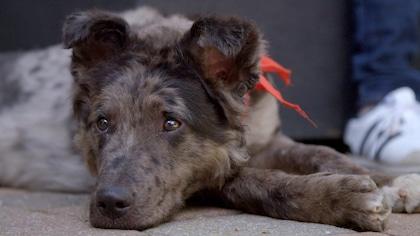 Apprenez-en plus sur les races de chiens