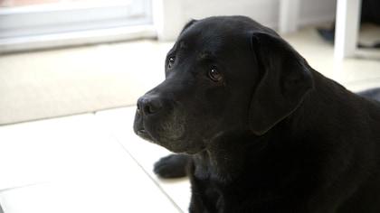 Anna et son bébé Labrador noir.