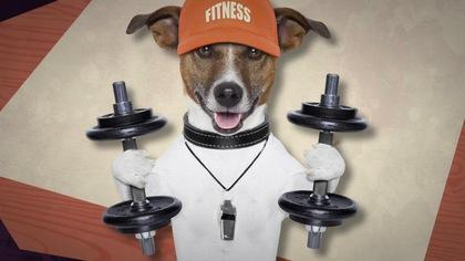 Quels aliments éviter pour les chiens?