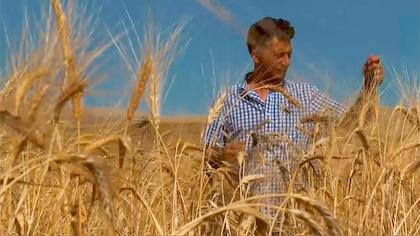 La culture du blé selon méthodes modernes de production ont un effet sur notre santé.