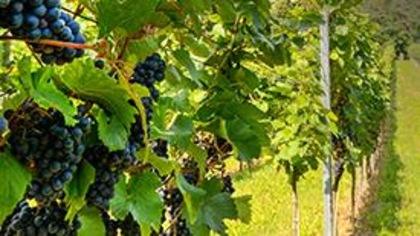 Découvrez le vin Fronsac de FrançoisChartier et gagnez un voyage à Bordeaux