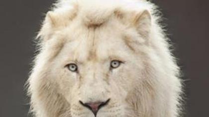 Àgagner :l'un des 20 forfaits de journée VIP au Parc Safari