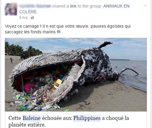 Capture d'écran d'un utilisateur Facebook qui croit qu'une statue de Greenpeace est une vraie baleine morte. «Voyez ce carnage!», peut-on lire.