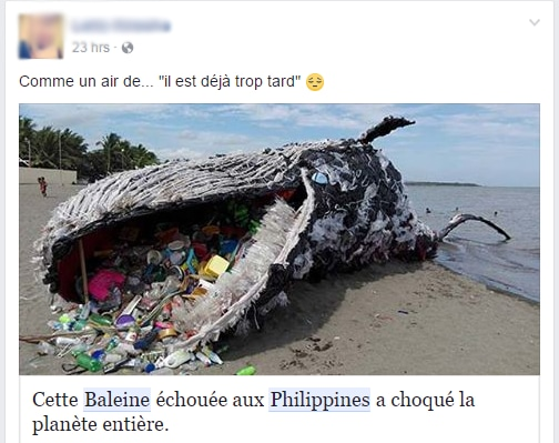 Capture d'écran d'un utilisateur Facebook qui croit qu'une statue de Greenpeace est une vraie baleine morte. «Comme un air de 'il est déjà trop tard'», peut-on lire.