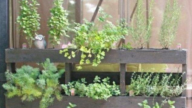 Un exemple de jardin vertical dont souhaite s'inspirer le restaurant Le Cachottier.