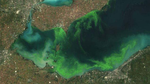 Le lac Érié est vert d'algues.