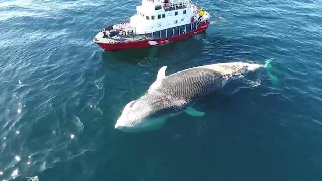 La carcasse flotte à côté d'une bateau de la Garde côtière canadienne