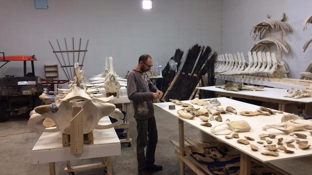 Plusieurs os de baleines sont sur les tables.