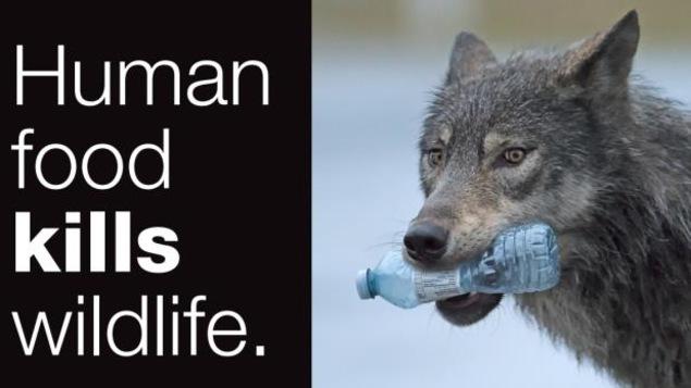 La publicité préventive affichée dans les rues de Banff avec écrit dessus «La nourriture humaine tue la faune»