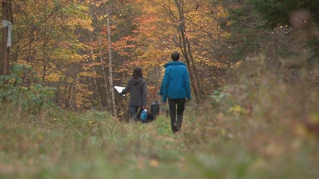 Un groupe de personnes marche dans un boisé. On les voit de dos.