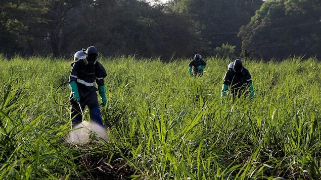 Des travailleurs portant des tenues de protection travaillent dans un champ.