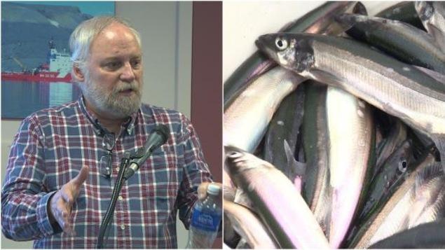Le scientifique Pierre Pepin explique l'importance du capelan pour la santé des poissons plus lucratifs, comme la morue ou la crevette.