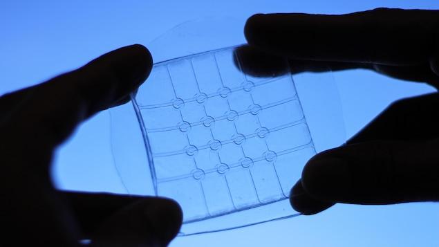 Deux mains tiennent un capteur tactile pliable, étirable et transparent.