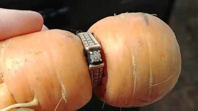 Une Albertaine retrouve sa bague de fiançailles autour d'une carotte.