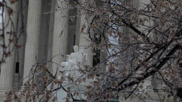 Les branches gelées d'un cerisier en fleur devant la Cour suprême des États-Unis, à Washington, le 14 mars 2017