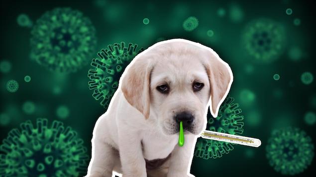 Un chiot, placé devant un fond vert où l'on voit des particules de microbes, a des mucosités vertes qui lui pendent du nez.