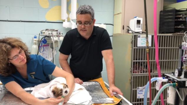 Le vétérinaire Adrian Watson en compagnie d'une collègue et du chiot Wallace sauvé d'une surdose au Fentanyl