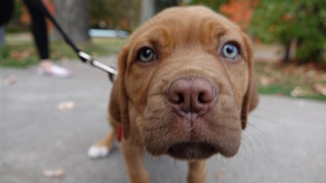 Gros plan sur le museau d'un chien