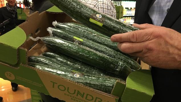Les concombres des Serres Toundra sont arrivés sur les tablettes des épiceries.