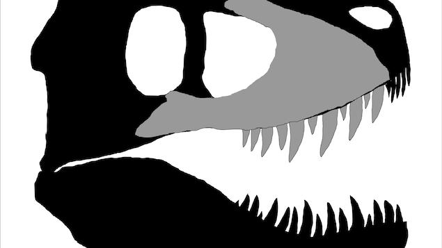 Illustration d'un crâne complet de dinosaure, avec la partie découverte en Colombie-Britannique en gris