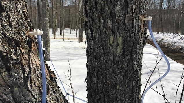 Deux arbres avec des tubes bleus et beaucoup de neige autour.