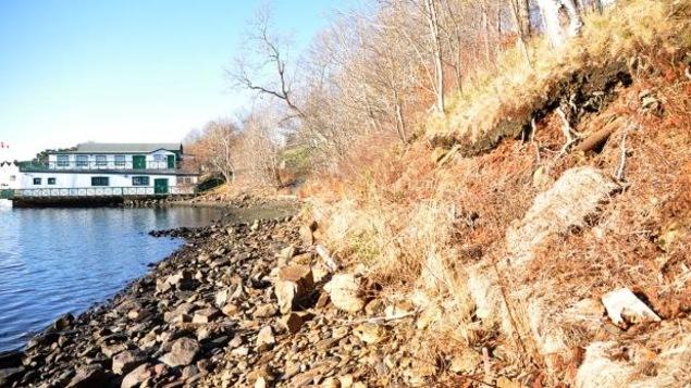 Du foin et des plantes sauvages sur un rivage à Halifax.