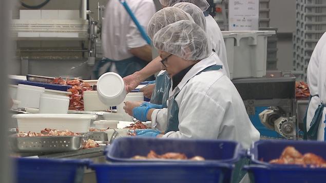 Des travailleuses dans une usine décortiquent du homard.