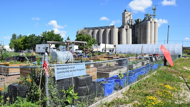 Le jardin communautaire de Moisson Winnipeg situé devant une grande usine.