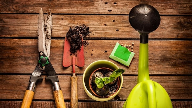 Une cisaille, un déplantoir, un pot avec un bulbe, des graines dans un sachet et un arrosoir