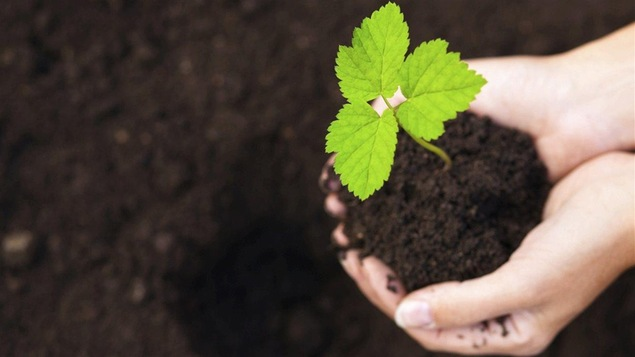 Main dans la terre. Plante verte. Jardinage.