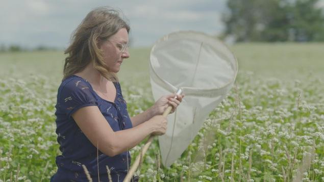 Les champs de sarrasin visités par Geneviève Labrie sont des lieux de biodiversité incroyables et regorgent d'insectes.