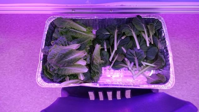 Selon la chercheuse Miyoung Suh, dans la majorité des cas, la valeur nutritive des légumes de la ferme était plus élevée que celle des produits importés du Sud.