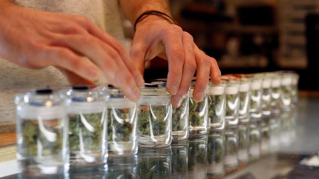 De la marijuana vendue à des fins médicinales.