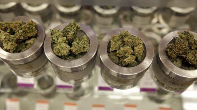 Le cannabis est dans de petits pots de verre.