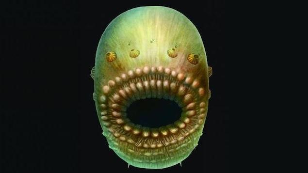Notre plus vieil ancêtre avait une énorme bouche et pas d'anus