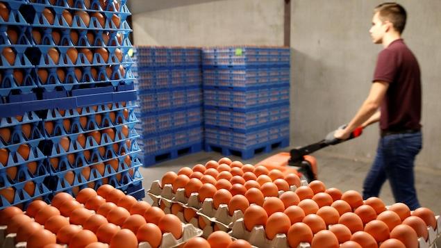 250.000 oeufs contaminés pourraient avoir été consommés en France