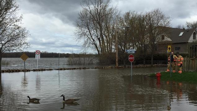 Des pompiers sont postés à une intersection de Pierrefonds, aux abords de la rivière des Prairies, pendant que deux canards circulent dans la rue inondée