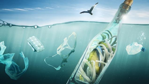 Un poisson se protège dans une bouteille de la pollution de l'environnement