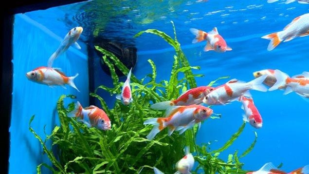 9000 poissons morts dans un aquarium de l universit de l for Aquarium 1 poisson