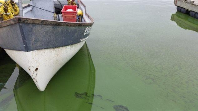 À Hecla, au Manitoba, les eaux du lac Winnipeg tirent sur le vert en raison d'une récente prolifération d'algues.