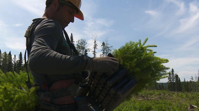 Alain Simoneau recharge sa cargaison de plants.