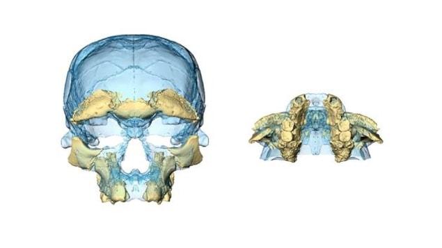 Reconstruction faciale réalisée à partir des fragments d'un crâne d'Homo sapiens trouvé à Jebel Irhoud, au Maroc.
