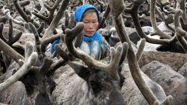 Une femme se tient parmi des rennes sur la péninsule de Yamal, au nord du cercle polaire.