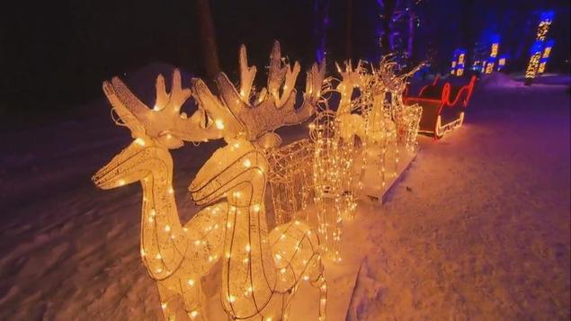Des chevreuils illuminés dans la neige dehors