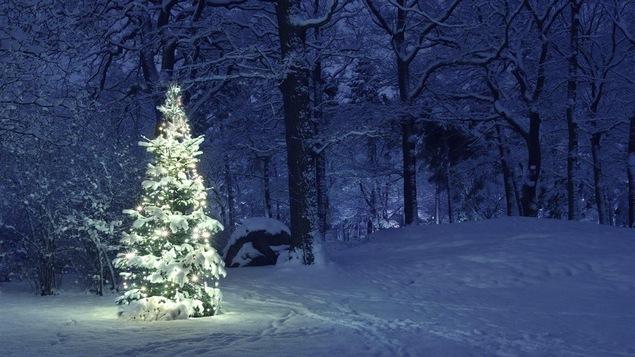 Un sapin illuminé dans une forêt