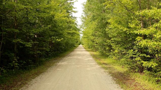 Le Sentier, parfois parfaitement linéaire et encadré par de grands arbres