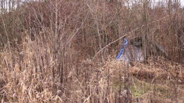 Une tente dans des broussailles
