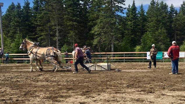 Plusieurs personnes ont participé à la compétition de tir de chevaux.