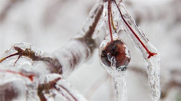 Environnement Canada a émis un avertissement de pluie verglaçante.