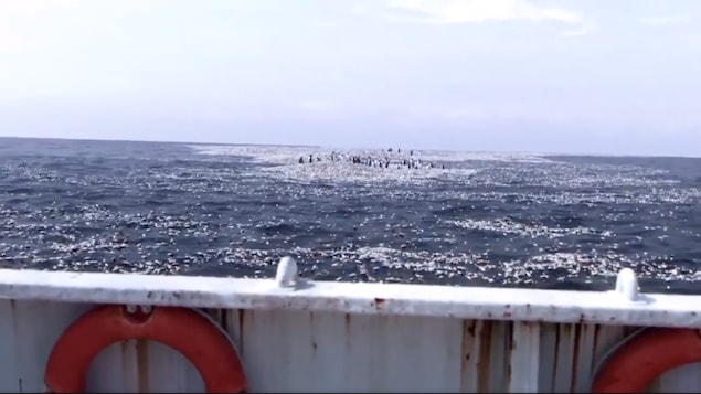 On voit un groupe de pingouins sur une île de plastique qui flotte dans l'océan.